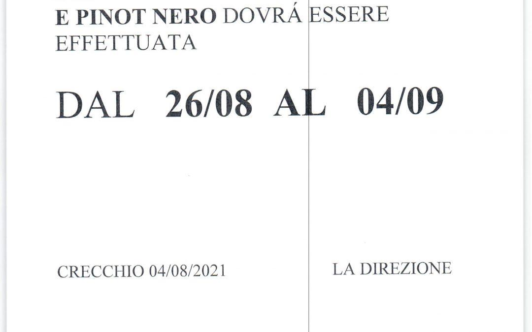 RACCOLTA PINOT GRIGIO E PINOT NERO VENDEMMIA 2021