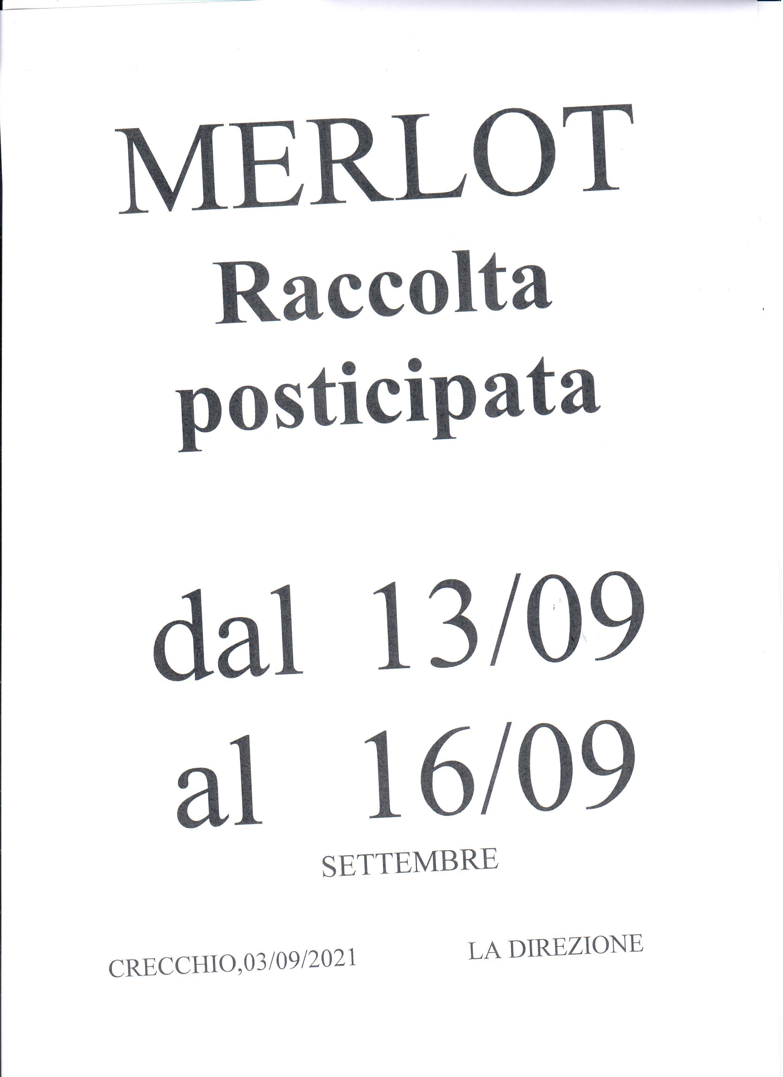 RACCOLTA MERLOT DAL 13/09 AL 16/09